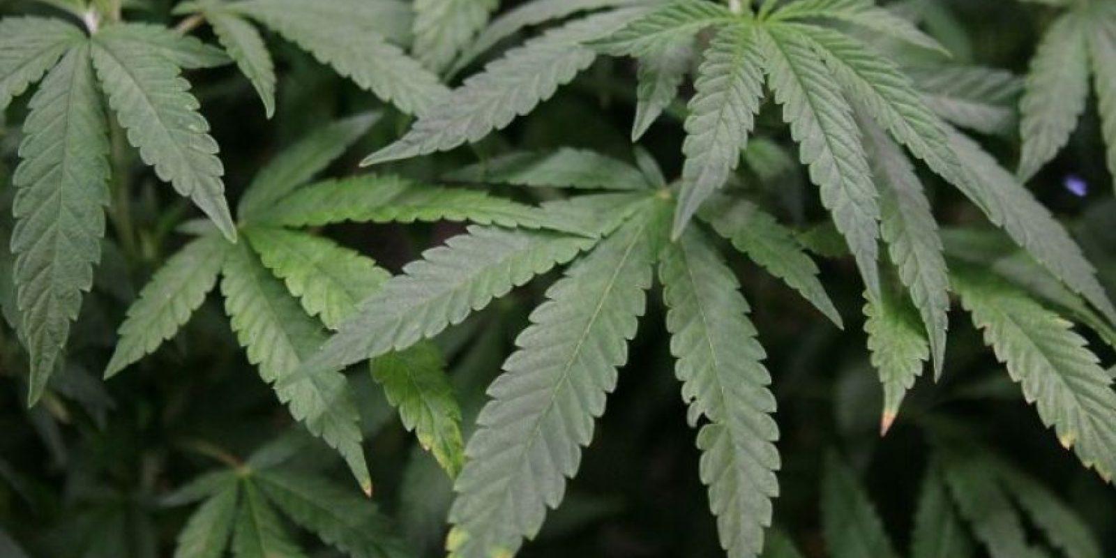 2. Colombia: Posesión despenalizada y es ilegal cultivar más de 20 plantas. Además, el presidente Juan Manuel Santos firmó el decreto para legalizar su uso medicinal Foto:Getty Images