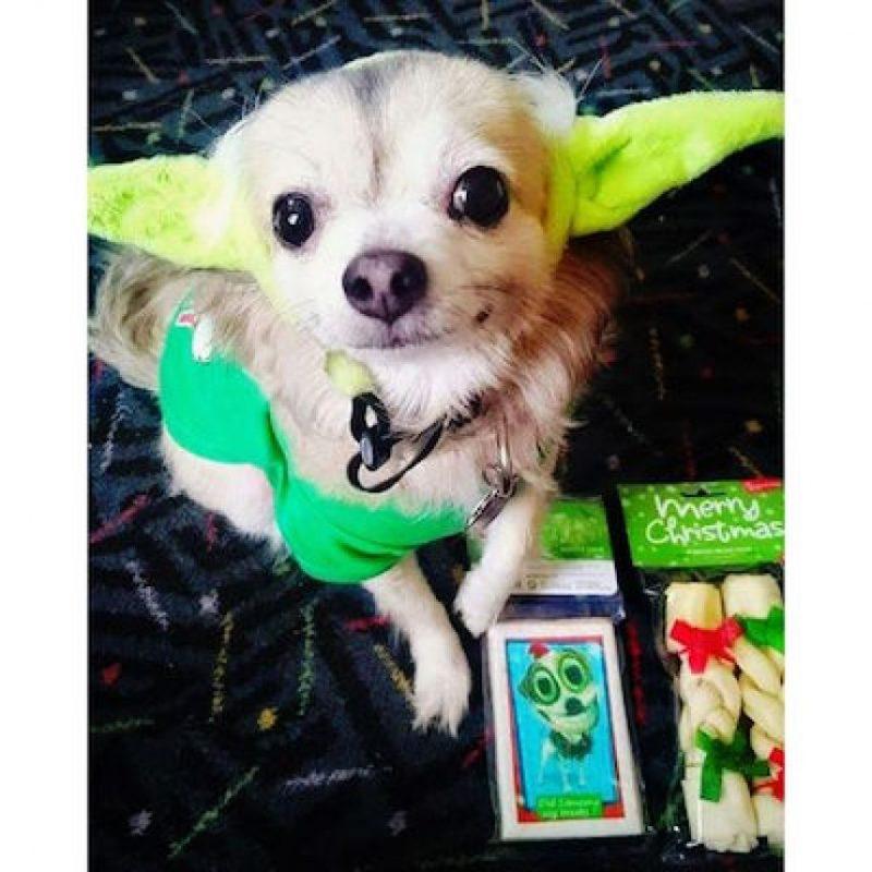 Algunos vistieron a sus mascotas Foto:Instagram.com