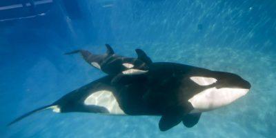 No son animales que ataquen directamente al ser humano Foto:Getty Images