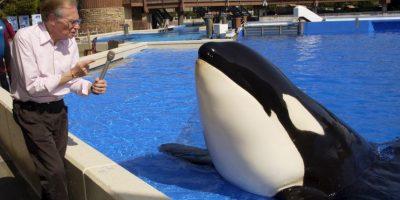 De jóvenes, se les puede confundir con delfines Foto:Getty Images