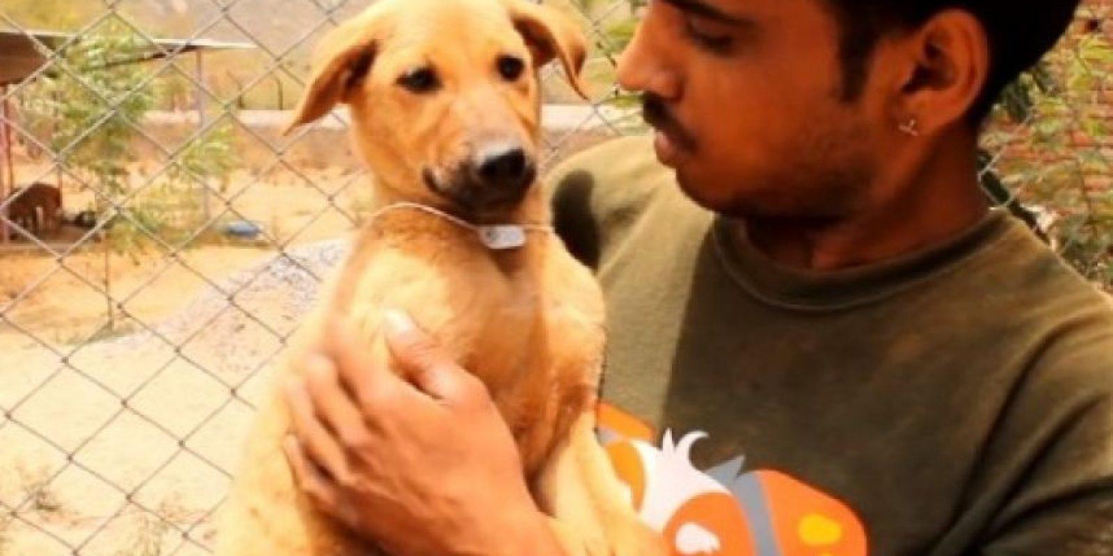 Un grupo de jóvenes decidio rescatarlo. Con una cuerda bajaron a uno de sus compañeros hasta donde se encontraba el desesperado perro. Una vez que el joven lo atrapó, los demás lo jalaron hacia la superficie. Foto:Animal Aid Unlimited