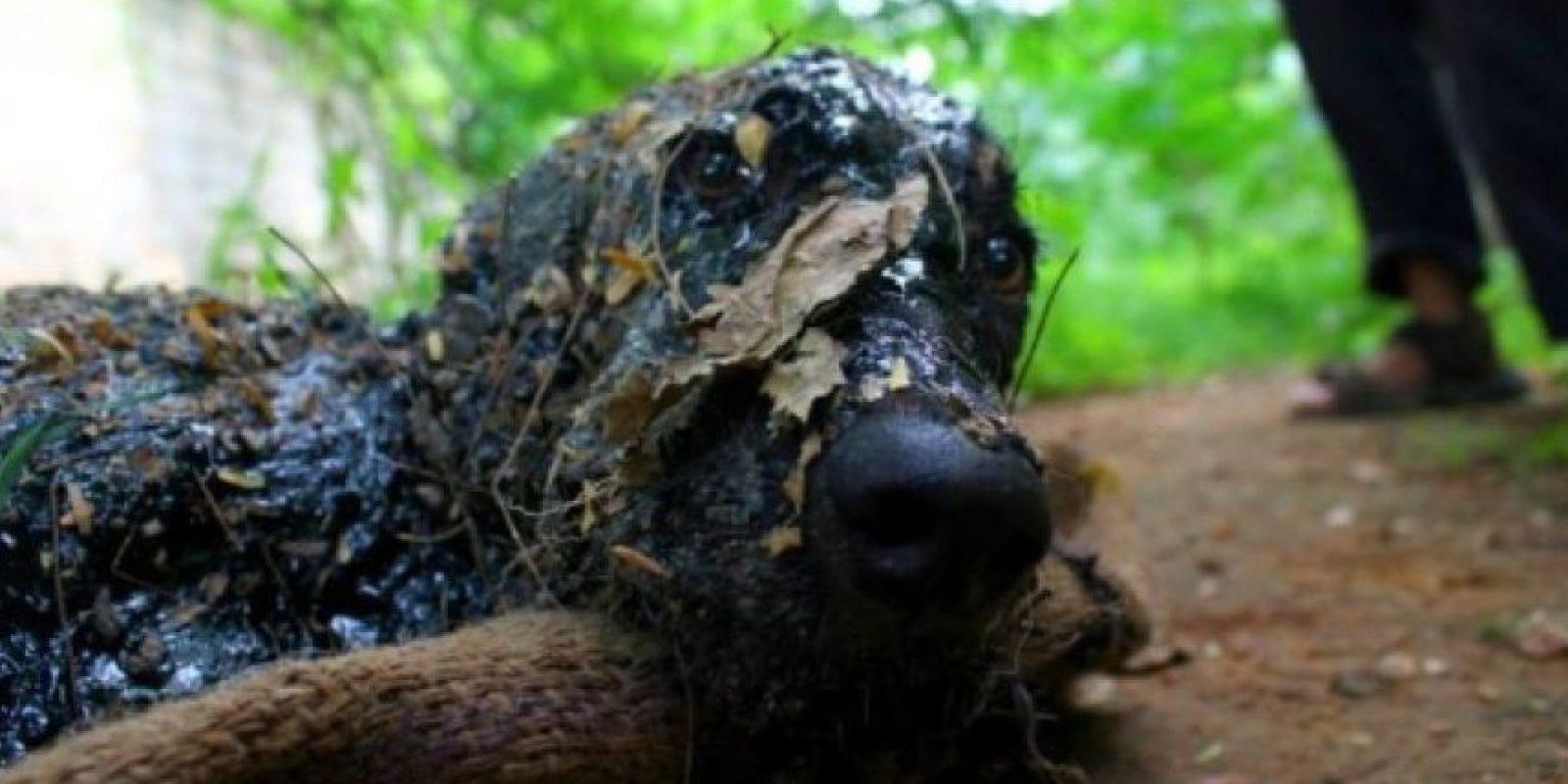 Otros rescates de mascotas que se volvieron virales Foto:Animal Aid Unlimited