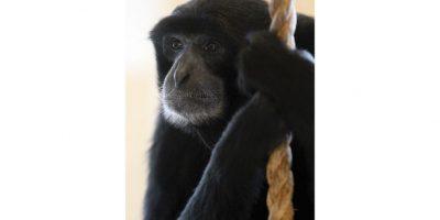 8 de febrero Año del MonoEsta fecha de febrero marca el inicio del Año Nuevo Lunar chino: el Año del Mono. Según los astrólogos, las personas nacidas en este año serán ingeniosas, inteligentes, y tendrán una personalidad magnética. El mono es también un símbolo de protección.