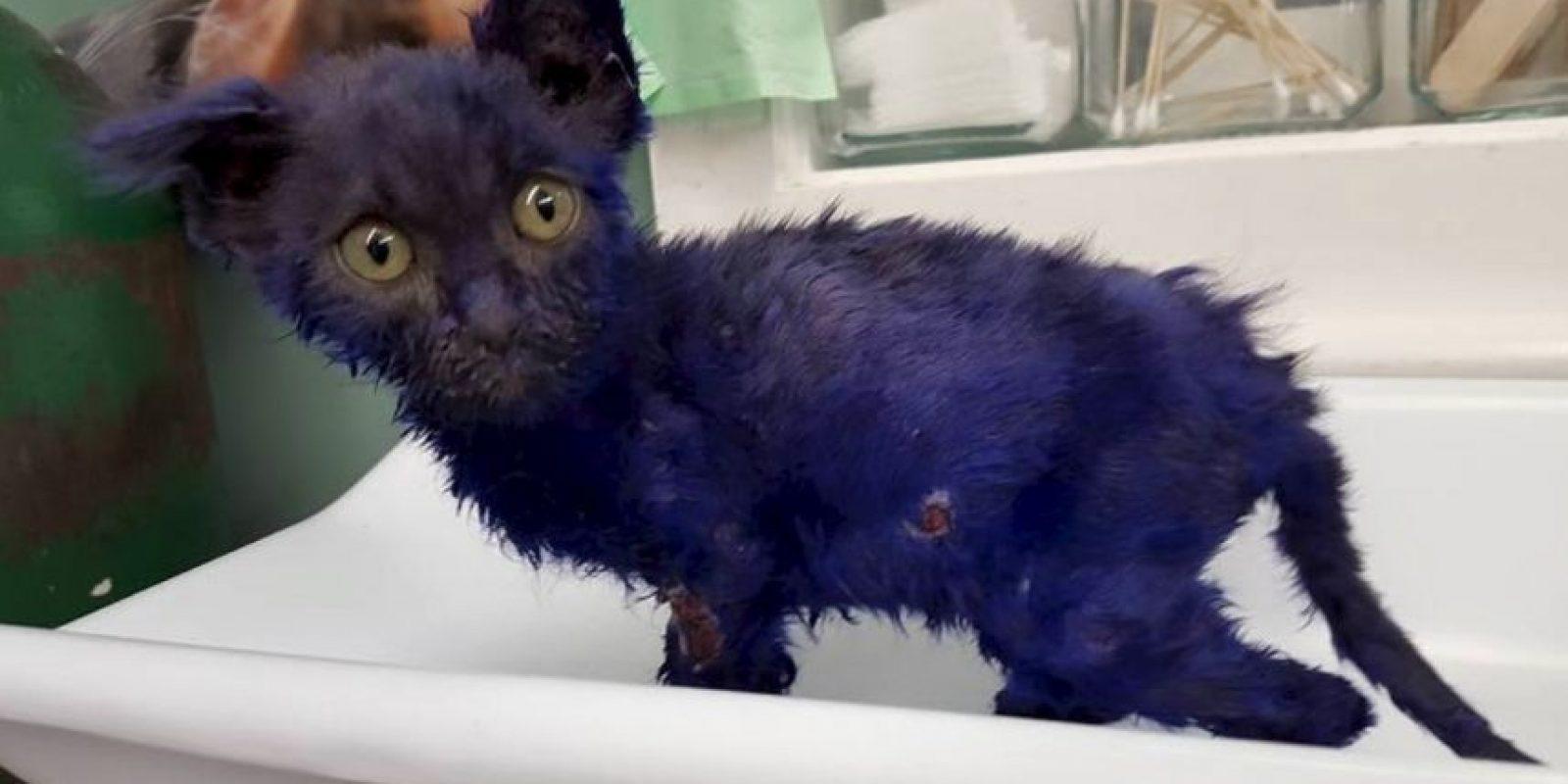 La cual se especializa en el cuidado de los gatos. Foto:facebook.com/NineLivesFoundation