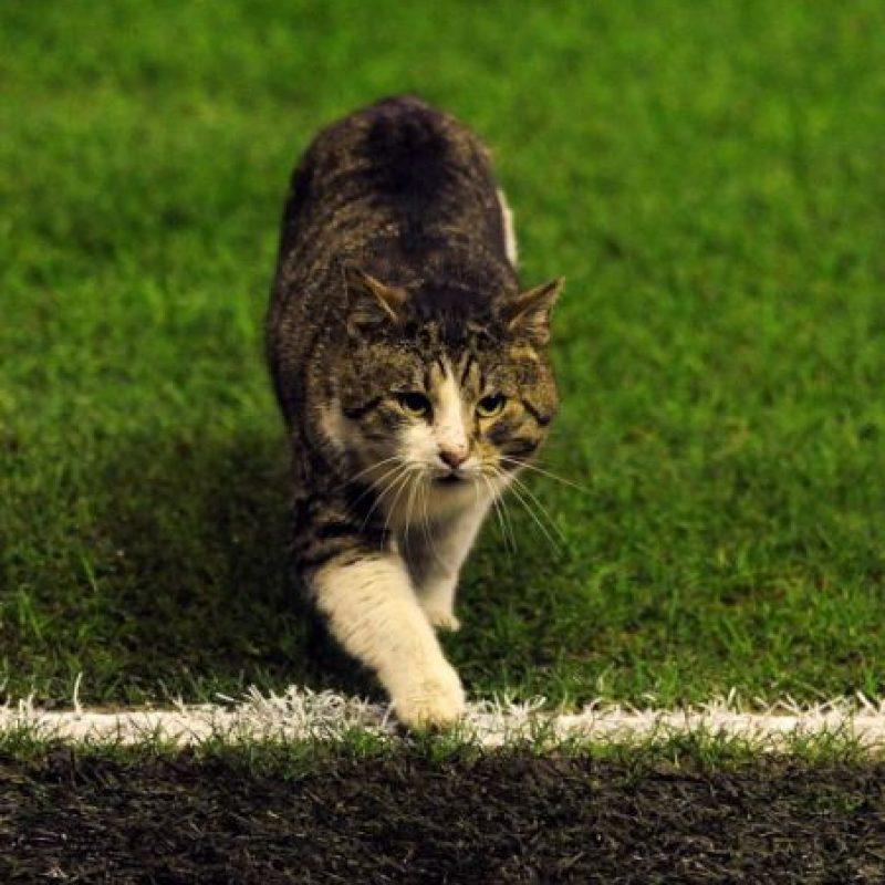 Ese mismo año, este gato se metió a la cancha de Anfield durante un partido entre Liverpool y Tottenham de la Premier League. Foto:Getty Images