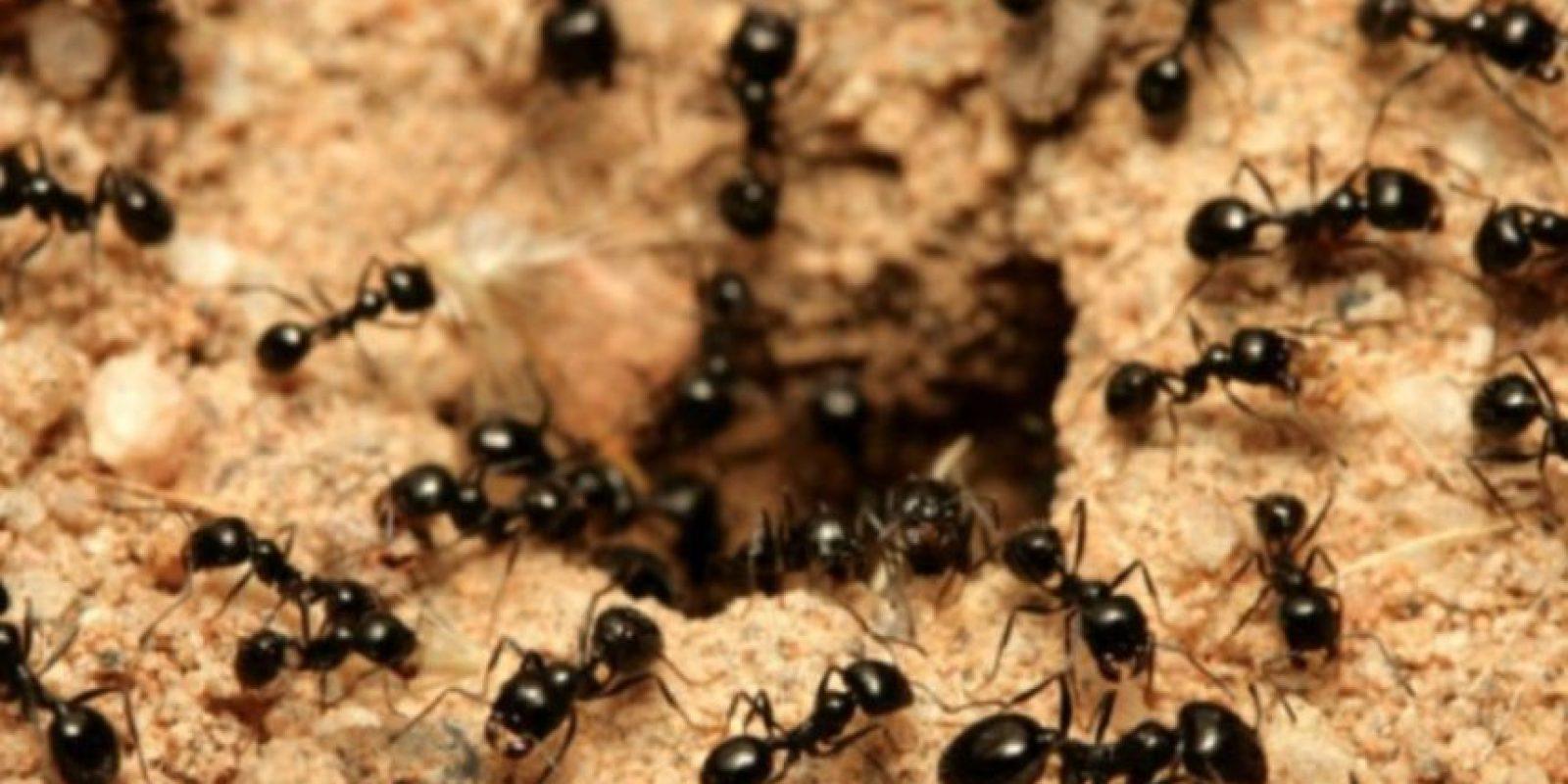 3- Devorado por hormigas. Otra de las muertes horribles ocurrió gracias a los paramilitares colombianos. Foto:vía Tumblr.com