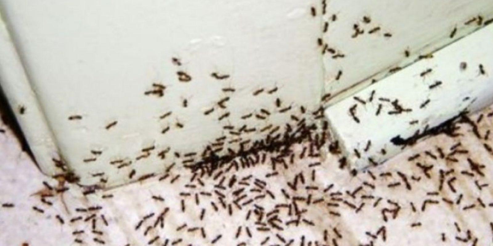Asimismo, las hormigas también atacan a viajeros desprevenidos al meterse por sus cavidades corporales. Esto pasó con un viajero en un safari africano. Foto:vía Tumblr.com