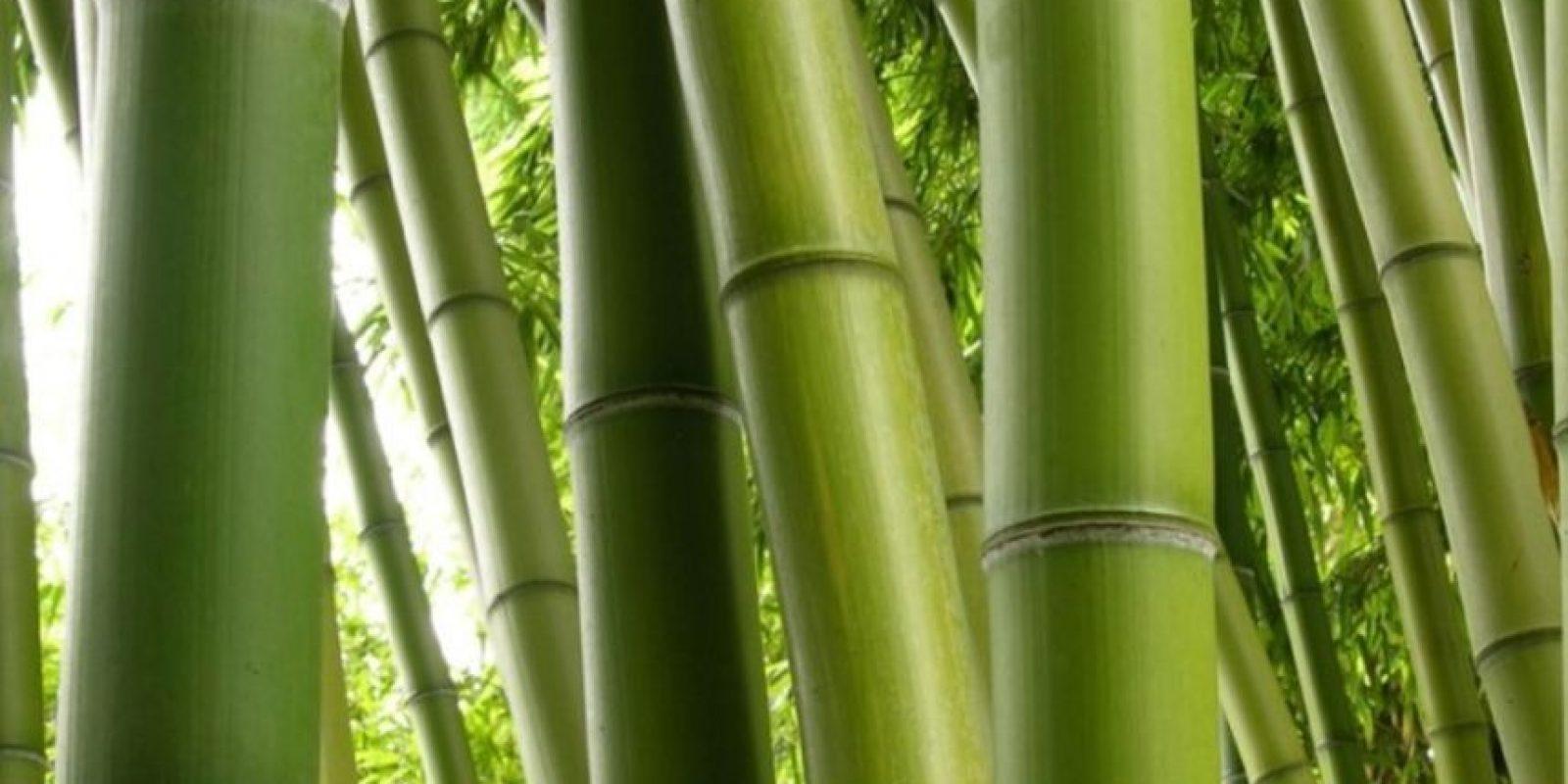 7- La muerte del bambú. Consistía en amarrar a una persona de pies y manos. Con un bambú creciendo debajo. Foto:Getty Images