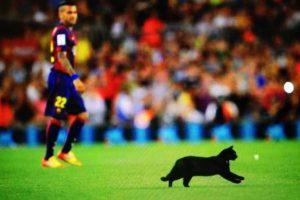 En la primera jornada de la Liga Española de la temporada 2014/2015, un gato negro entró al Camp Nou en el duelo entre Barcelona y Elche. Foto:Vía twitter.com