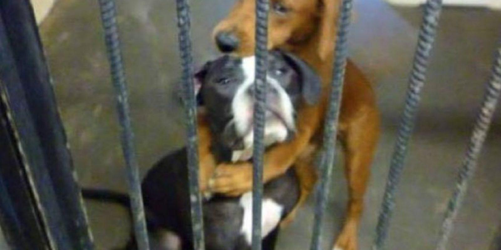 La foto de estas dos perritas abrazadas antes de ser sacrificadas también se hizo viral. Foto:vía Facebook