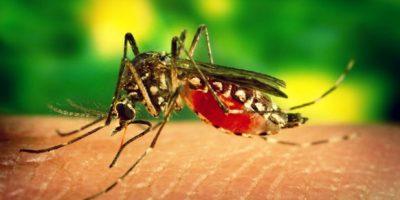 Una alemana que visitó Haití y Guadalupe da positivo a zika, según la OPS