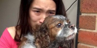 Bomberos logran salvar la vida de un cachorro tras incendio Foto:facebook.com/Melbourne.MFB