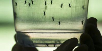 Siete claves para comprender el virus del Zika