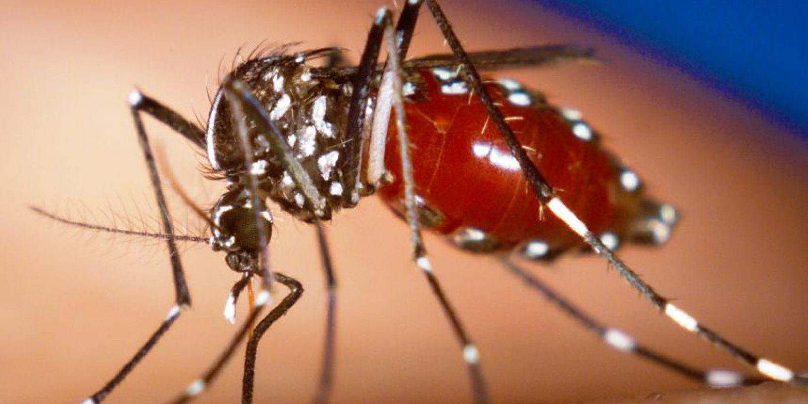 El virus zika está relacionado con el dengue, la fiebre amarilla y el virus del Nilo Occidental, y se transmite a través de una picadura de mosquito.