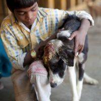 Y luego a curar su infección. Foto:vía Facebook/Animal Aid Unlimited