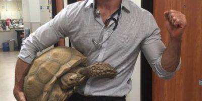 Él es Evan Antin, el veterinario más sexy del mundo