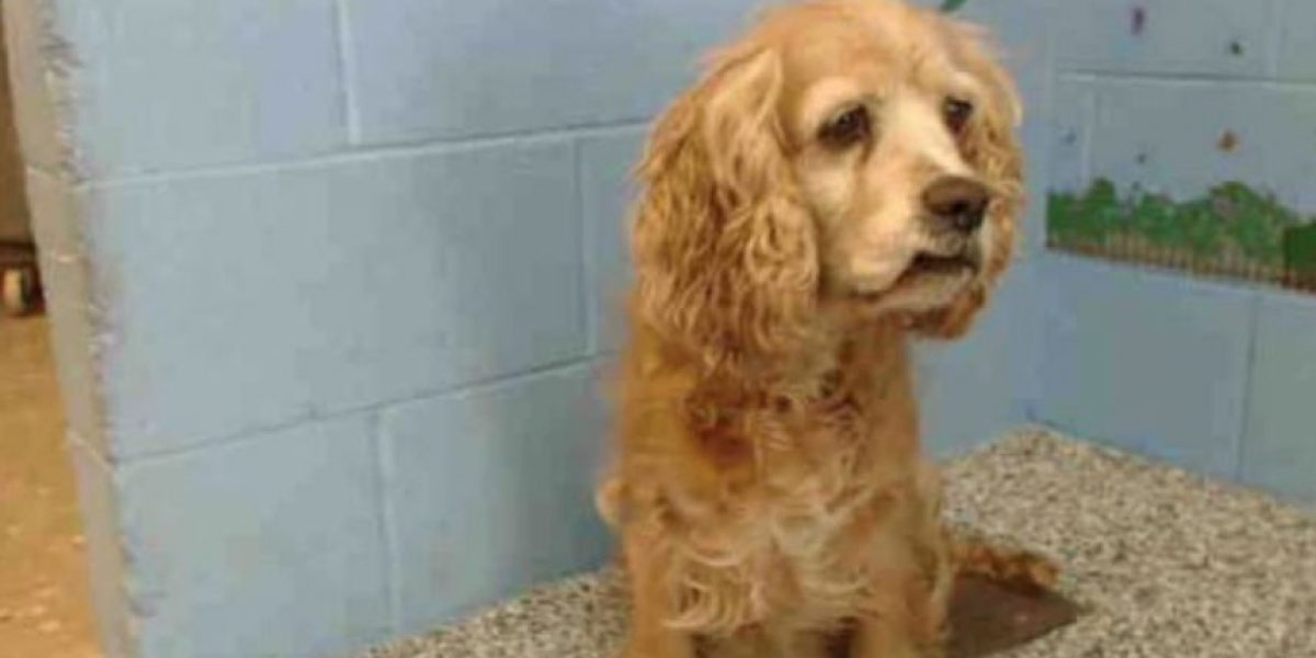 Perrita anciana  llora al ser abandonada por cachorro y se vuelve viral