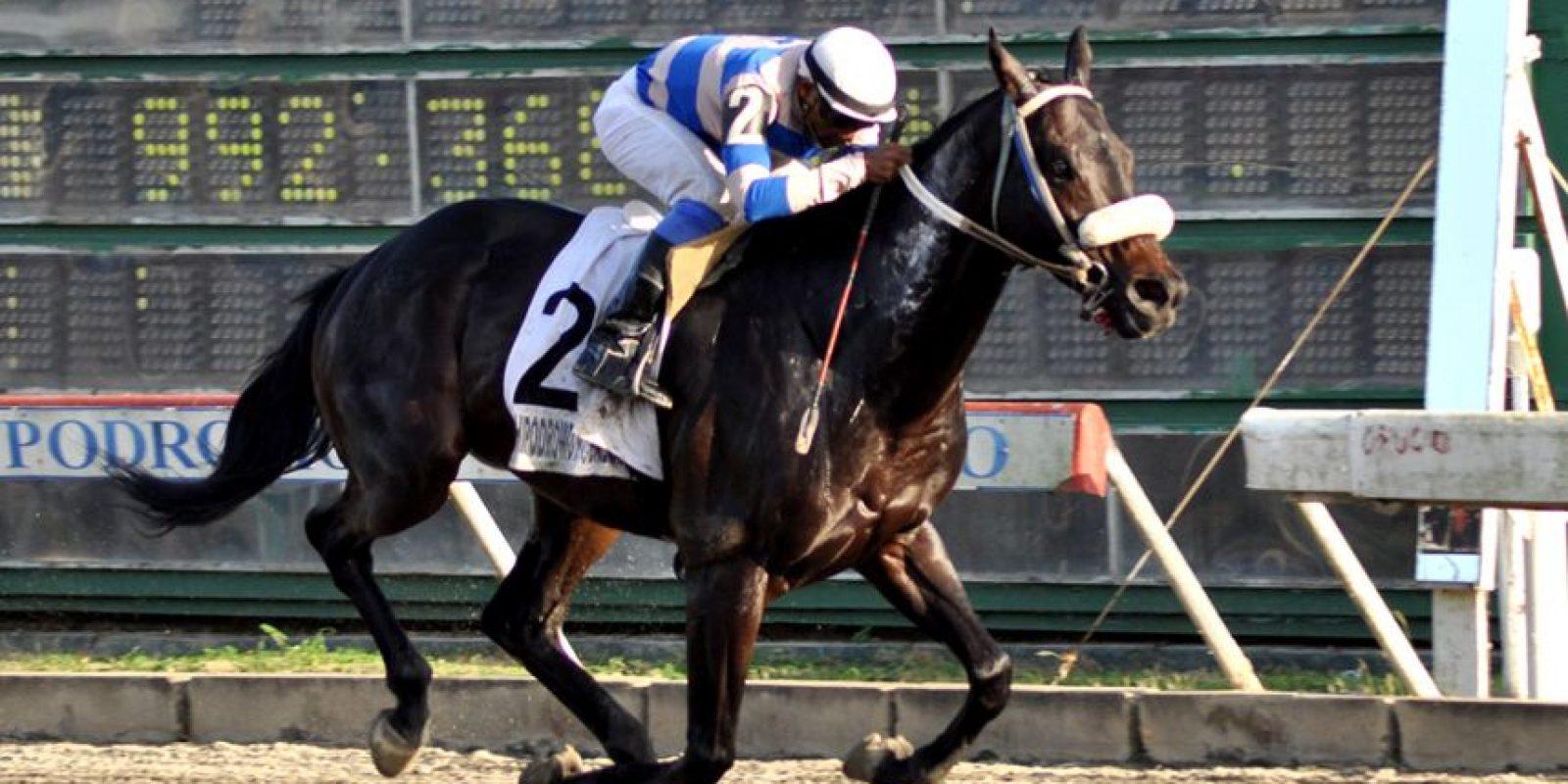 El ejemplar Oso Negro (2) al momento de cruzar la meta en la carrera estelar, la quinta, realizada este martes en el hipódromo V Centenario. Foto:Fuente Externa