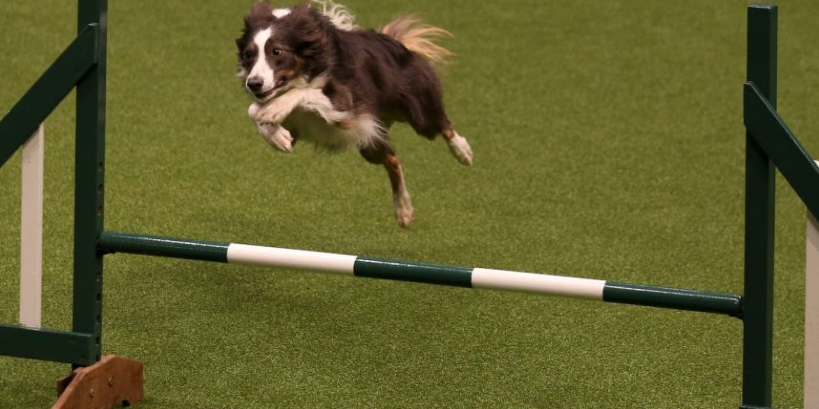Se demostró que los perros que eran más rápidos también fueron más precisos Foto:Getty