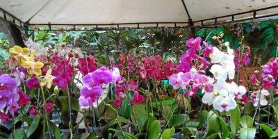 Jardín Botánico acogerá exposición y concurso de orquídeas del 10 al 13 marzo