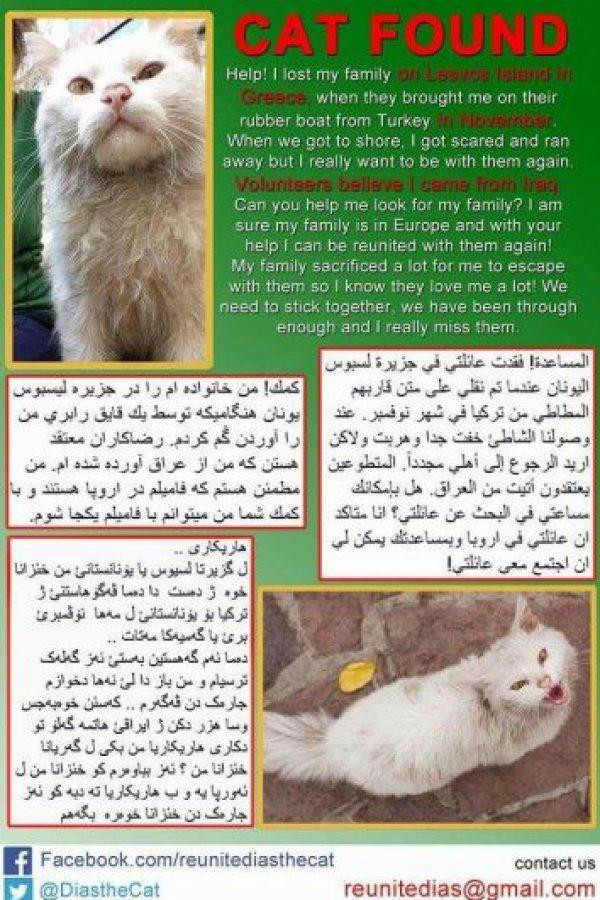 Una veterinaria local decidió iniciar la búsqueda de sus dueños Foto:Twitter.com/DiasTheCat