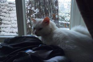 Además, el dinero extra sería para la familia original del gato Foto:Twitter.com/DiasTheCat