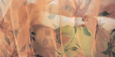 5- Protección al dormir. Si se encuentra en un país o zona con presencia del mosquito Aedes aegypti, utilice aire acondicionado o malla mosquitera en el dormitorio. Si eso no es posible, cubra ventanas y puertas con mallas que impidan el acceso de insectos. Foto:Fuente Externa