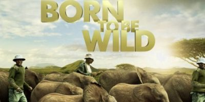 """Born to be Wild: IMAX (3D)"" – Disponible a partir del 27 de marzo."