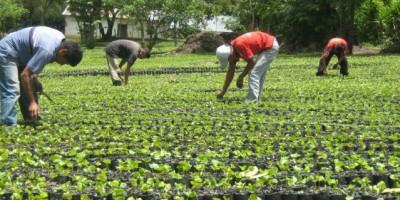 Israel está interesado en ofrecer apoyo técnico al sector agropecuario de RD