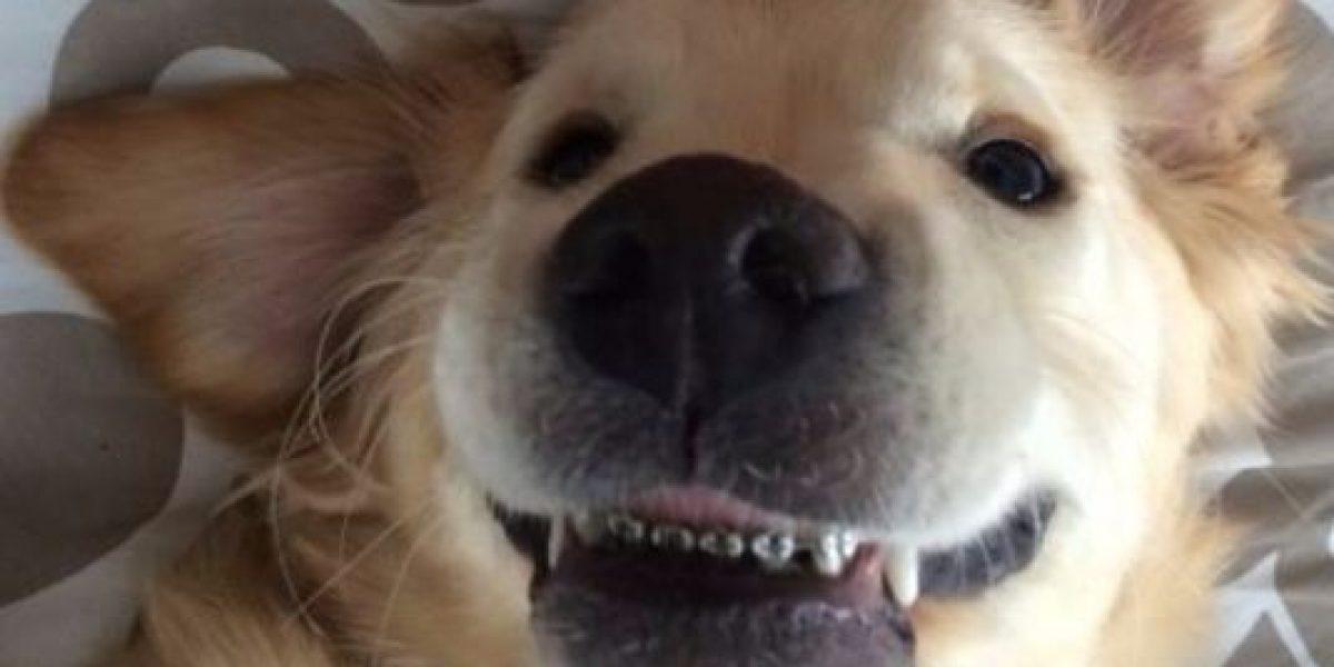 Fotos: Este perrito con brackets
