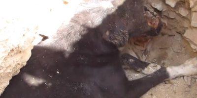 Abandonado para morir. Foto:vía Facebook/Animal Aid Unlimited