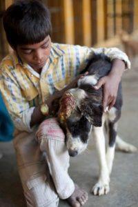 Estaba infestado. Foto:vía Facebook/Animal Aid Unlimited