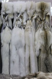 Participó en una campaña en 2009 luciendo prendas confeccionadas con pieles de animales, a pesar de que meses antes se había manifestado en contra del uso de pieles. Foto:Getty Images