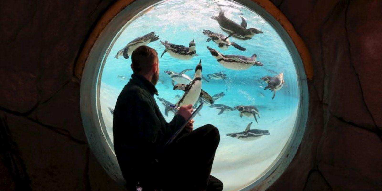 Su principal alimento sin peces Foto:Getty Images