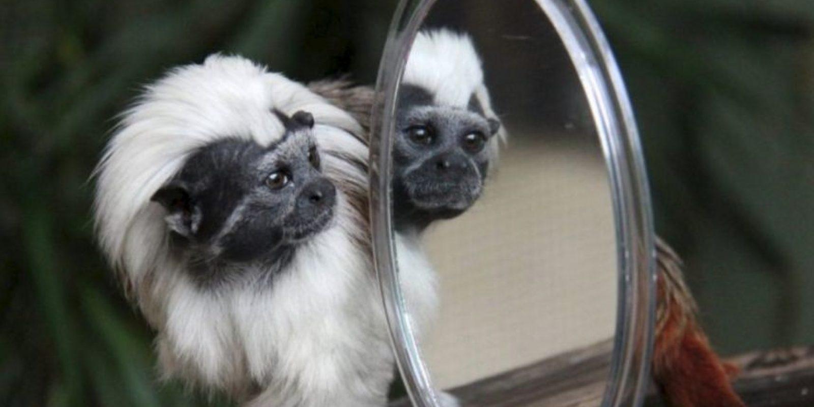 Este ejemplar en particular vive en el Zoológico Taronga. Foto:Vía Facebook.com/tarongazoo