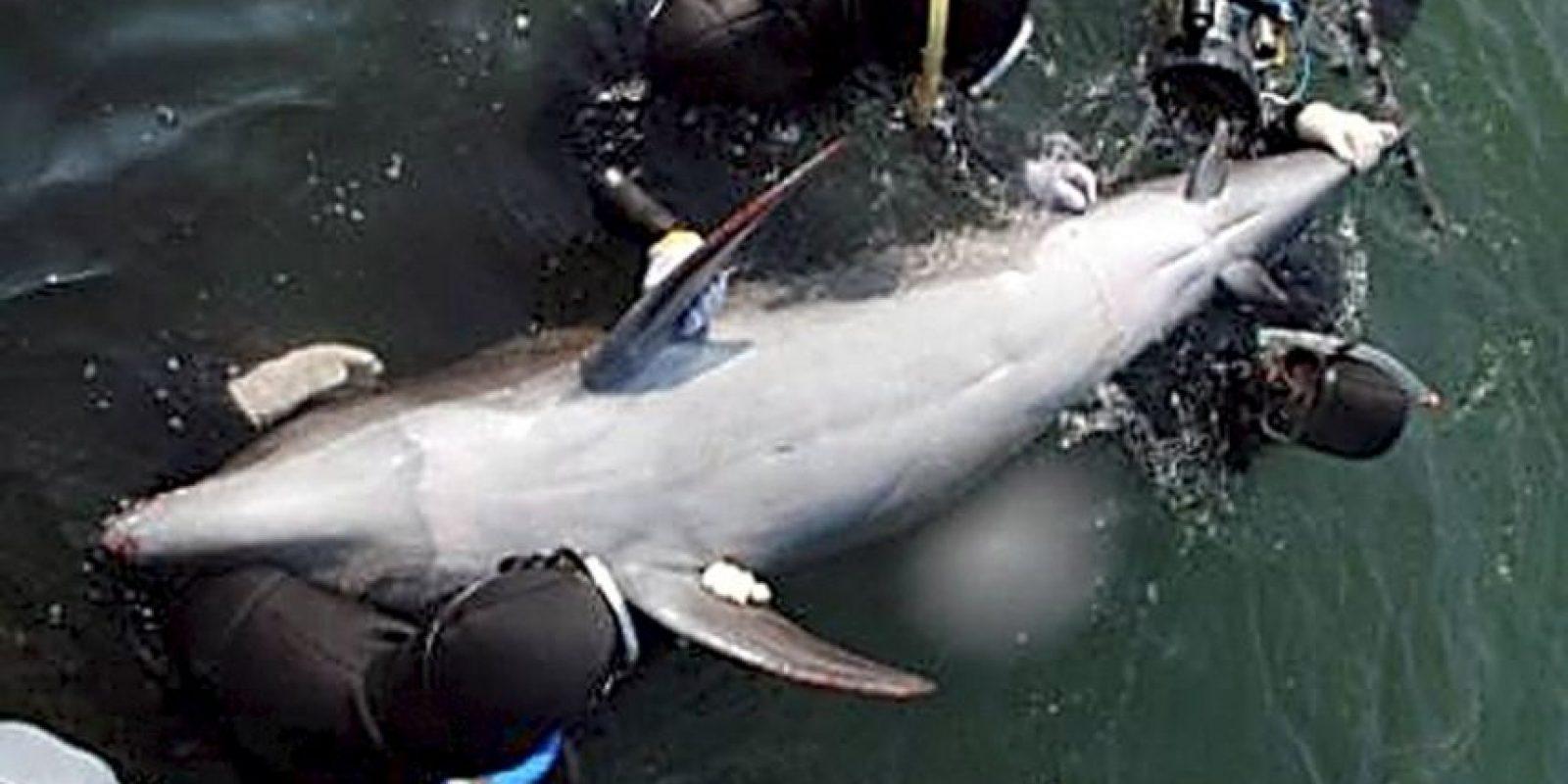 Datos curiosos que deberían saber de los delfines Foto:Getty Images