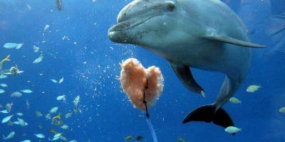 Su respiración no es un reflejo, como en los seres humanos, sino que necesitan respirar a voluntad Foto:Getty Images