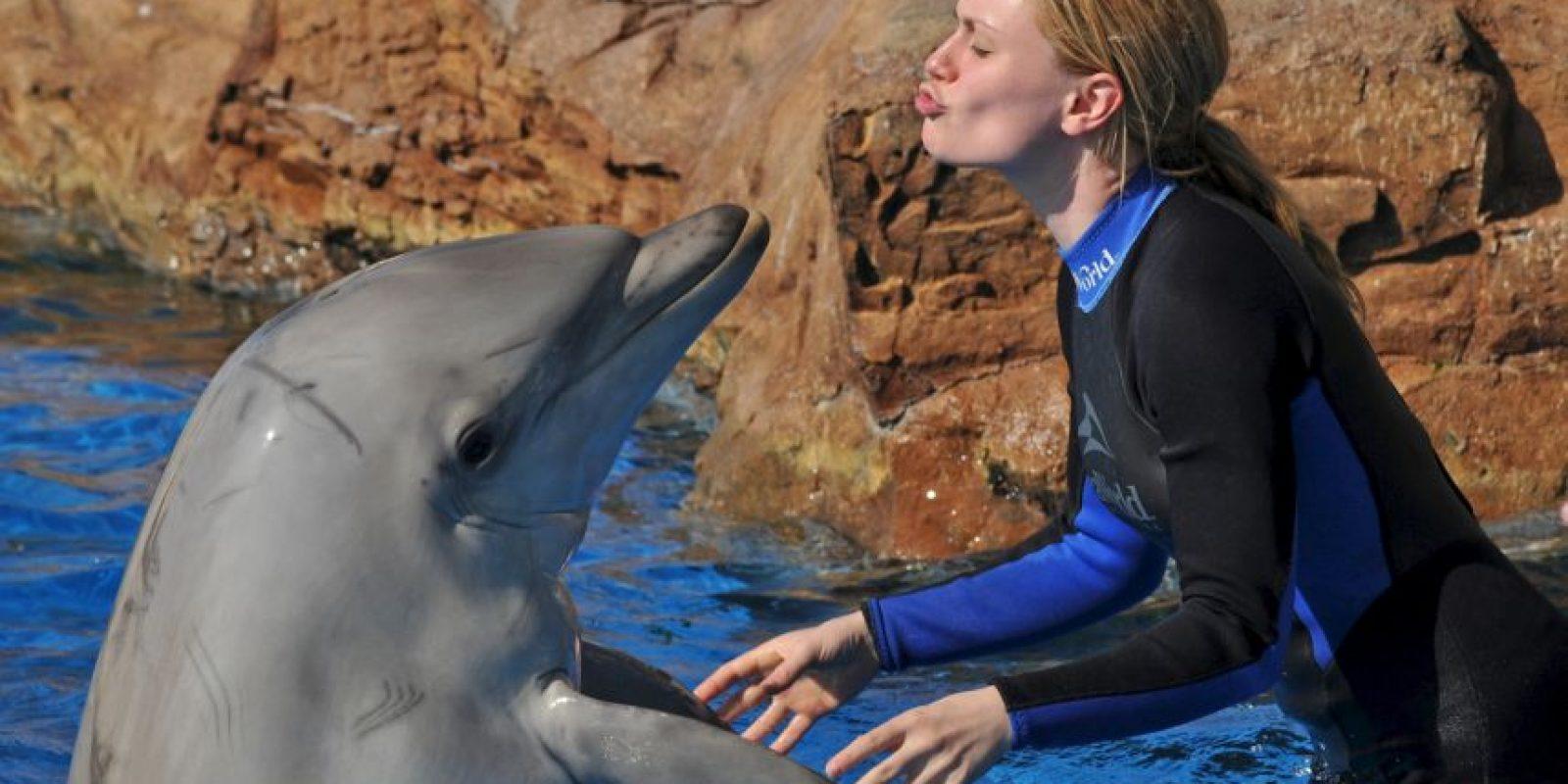 Se ha visto que, cuando uno delfín de un grupo está lastimado, los demás acudirán inmediatamente a ayudarle Foto:Getty Images