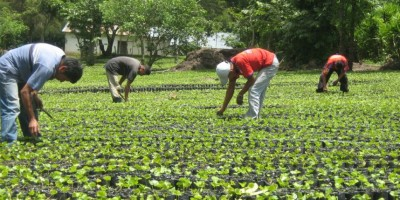 Italia interesada en producción agrícola de República Dominicana