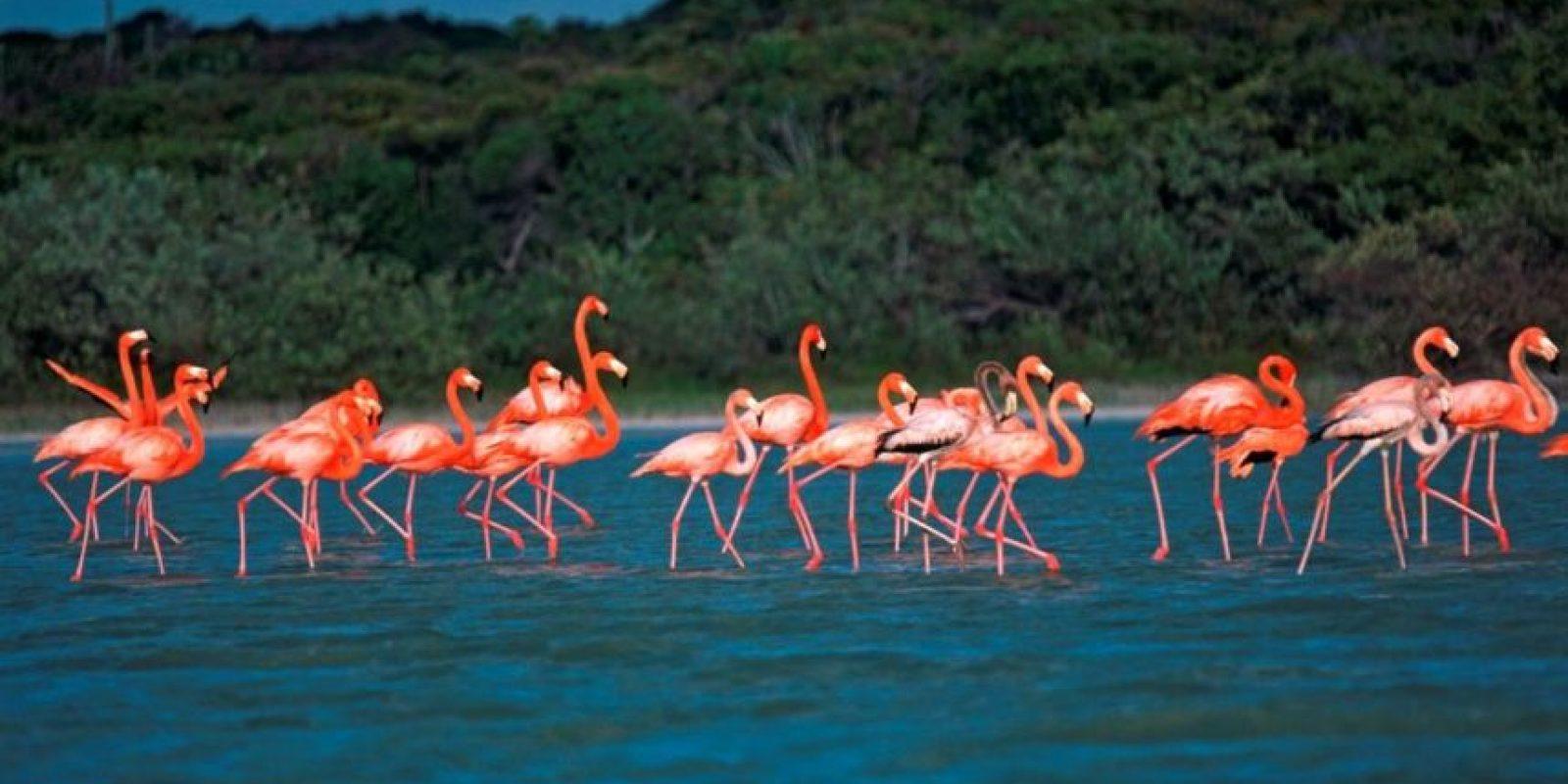 6- Barahona. Es una de las provincias con mayor biodiversidad de la República Dominicana. Dueña de impresionantes panorámicas, una belleza salvaje capaz de robarte el aliento, y refugio de surfistas de todo el mundo. Y no es casualidad, ya que cuenta con varias playas ideales para la práctica de deportes acuáticos extremos. Foto:Fuente Externa