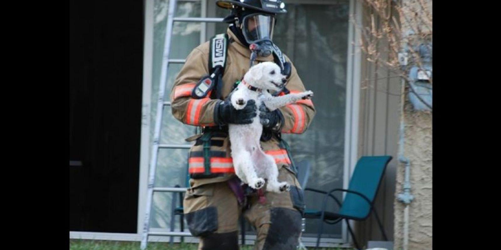 Este cachorro no ha sido el único con suerte. Foto:facebook.com/ProvidenceVFC29/?fref=photo