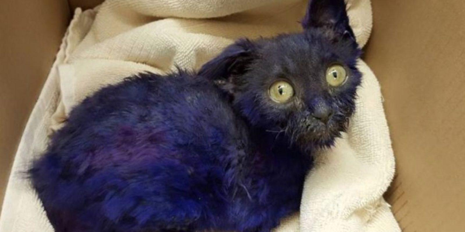 Según la veterinaria Mónica Rudiger, el pequeño era utilizado como cebo en el entrenamiento de perros de pelea. Foto:Vía facebook.com/NineLivesFoundation