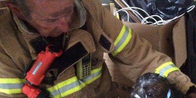 La brigada de Bomberos Metropolitana (MFB) salvó la vida de un perrito en peligro en Australia Foto:Vía facebook.com/Melbourne.MFB