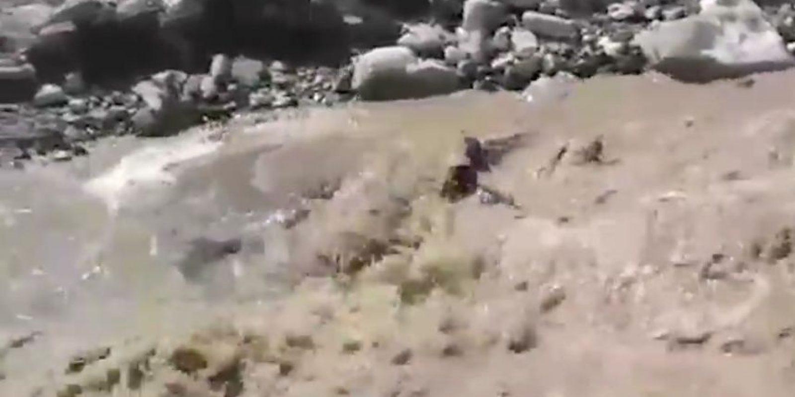 """El pequeño animal luchaba contra una corriente de agua que lo había arrastrado. Luego de ser rescatado, recibió el nombre de """"Príncipe"""" Foto:Vía Youtube.com/policiadecolombia"""