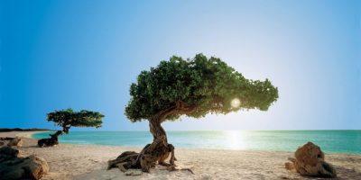 """2- Aruba. Recientemente TripAdvisor.com nombró a """"Eagle Beach"""", playa del territorio de Aruba, como una de las 10 mejores playas del mundo. Además, su parque nacional (el más grande del Caribe) te dejará sin palabras, ya que abarca el 20% de la isla y es una reserva natural en la que podrás conocer de la historia de sus antepasados indígenas. Foto:Fuente externa"""
