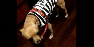 También venden disfraces para perros Foto:Twitter.com