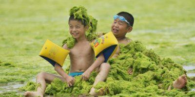 Shandong, China. Está repleta de algas en la orilla. Foto:Getty Images