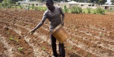 Haití recibe 8 millones de dólares del BDC para impulsar producción agrícola