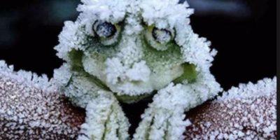 Supuestamente, existe un sapo que resiste a las bajas temperaturas. Foto:The Museum of Hoax