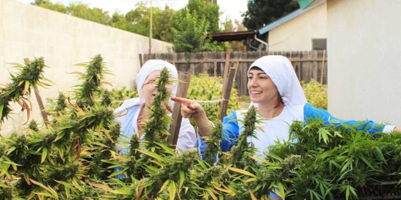 La planta contiene una sustancia química llamada delta‐9‐tetrahydrocannabinol (THC) Foto:facebook.com/sistersofthevalley